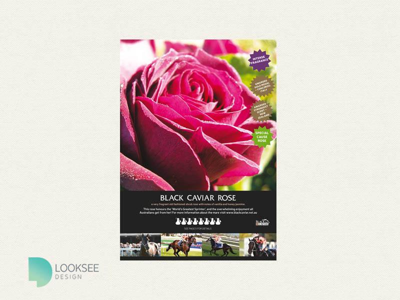 Black Caviar Rose – Knight's Roses