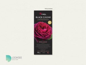 Black Caviar rose banner