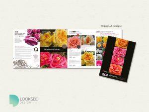 Knight's Roses 2011 catalogue