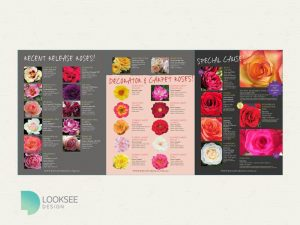 Knight's Roses 2015 potted roses brochure interior