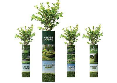 Hedge in a Bag Packaging